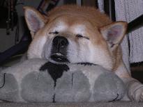 2日連続室内犬_c0049950_21111350.jpg