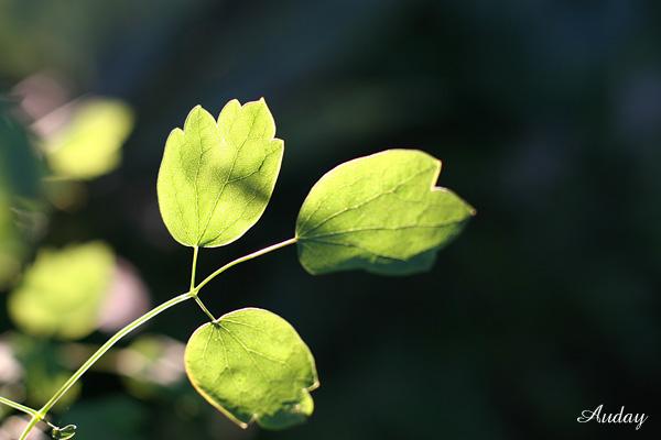 お散歩 秋の陽の傾く頃_c0048494_2245468.jpg