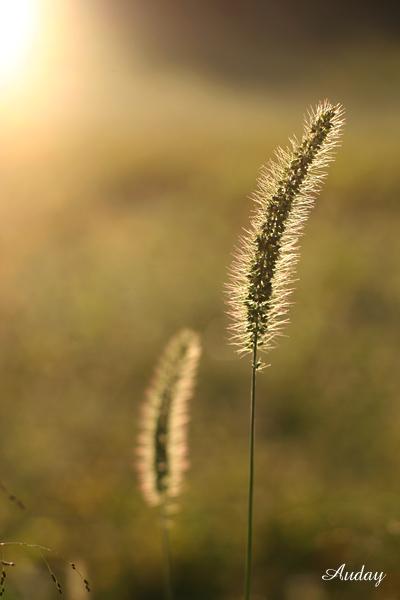 お散歩 秋の陽の傾く頃_c0048494_2246281.jpg