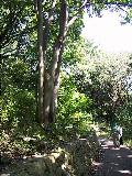陣ヶ下渓谷公園樹木調査_c0007174_23493214.jpg
