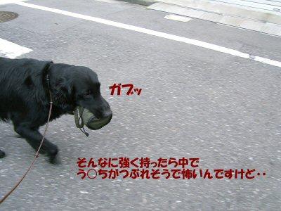 c0050400_18262186.jpg
