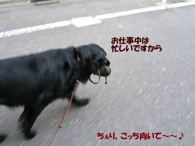 c0050400_18344059.jpg