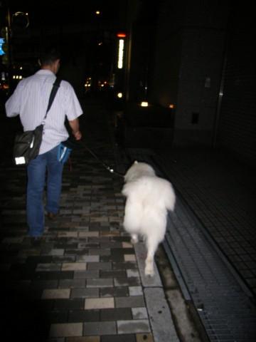 『お散歩の中断はご遠慮ください』_c0062832_13395354.jpg