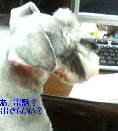 c0038436_1123269.jpg