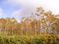 秋の半日ドライブ_d0028589_21314520.jpg