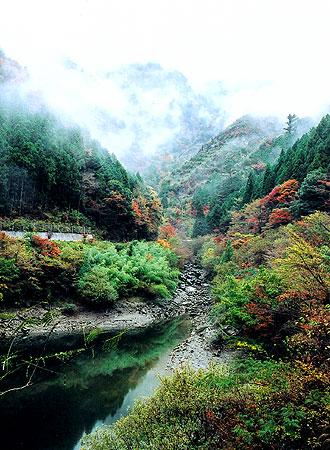 京都議定書と森林問題_e0073691_2017568.jpg