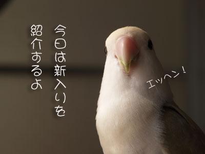 d0010868_18404879.jpg