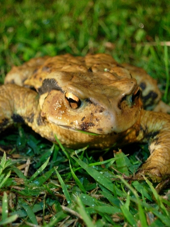 我が家の庭にも爬虫類?_e0091670_21215890.jpg