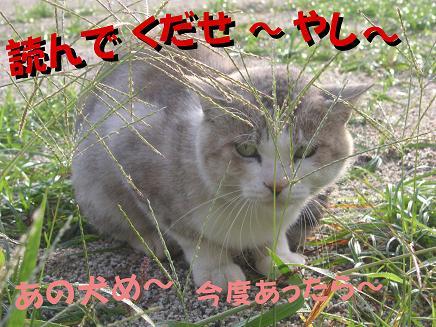 たっちゃんs コレクション (今日の担当 ドラ吉) 2005年10月14日金曜日_e0039087_1985865.jpg