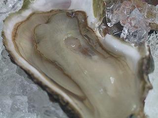●生牡蠣!_c0020129_1050249.jpg
