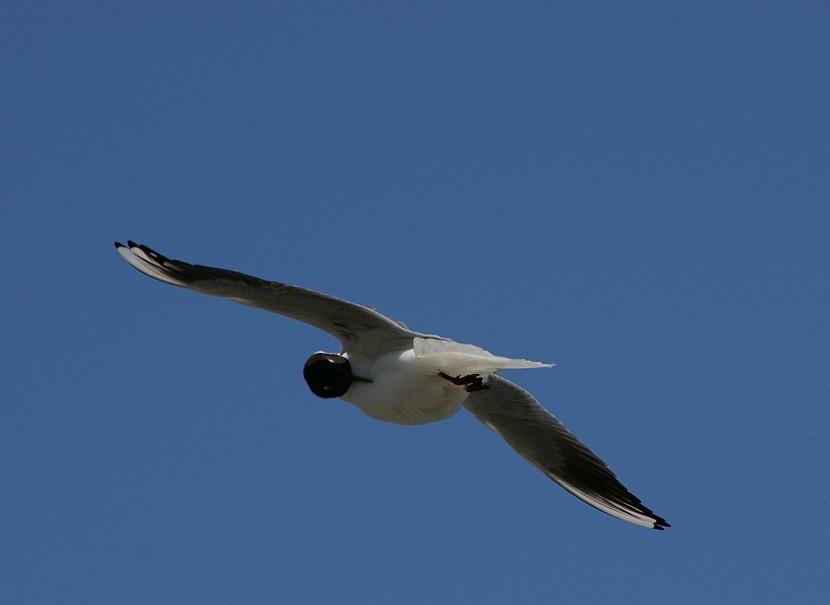 飛  翔 No.4_d0039021_21182991.jpg