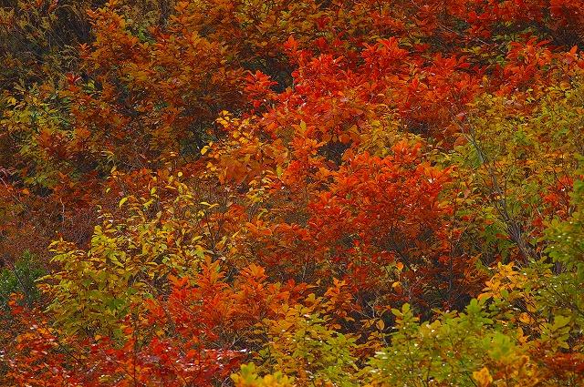 三方岩の紅葉~白山スーパー林道(1)_d0043136_21565091.jpg