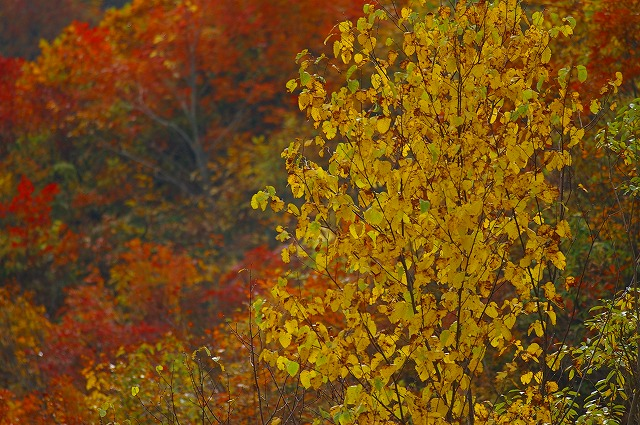 三方岩の紅葉~白山スーパー林道(1)_d0043136_2157352.jpg