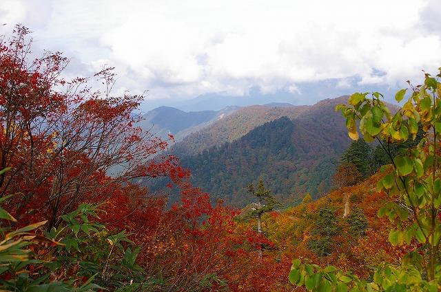 ナナカマド紅葉~白山スーパー林道(2)_d0043136_2056072.jpg