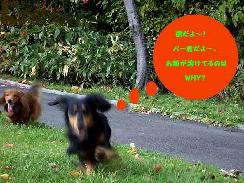 c0045763_1653279.jpg