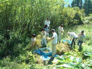 池川の焼畑、蕎麦を収穫_e0002820_2352731.jpg