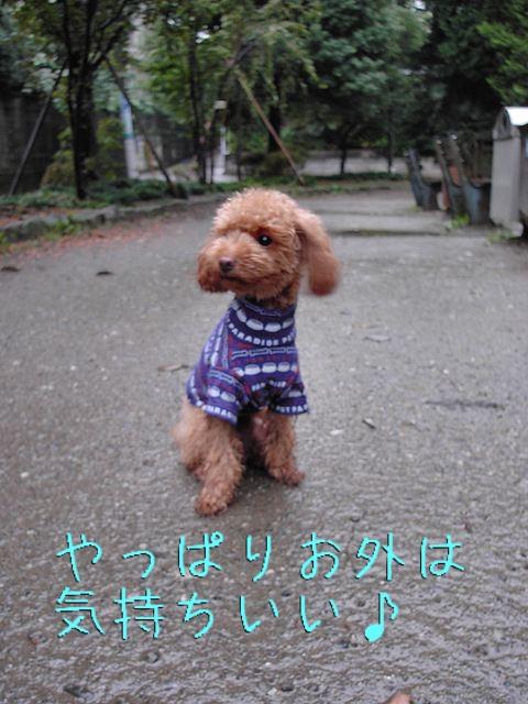 b0023934_2012615.jpg