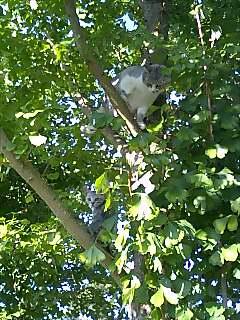 収穫も落ち着いてきたので、木登り講習_d0010039_8425783.jpg