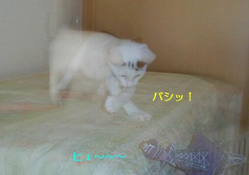 b0024945_1410454.jpg