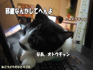 b0041182_1003482.jpg