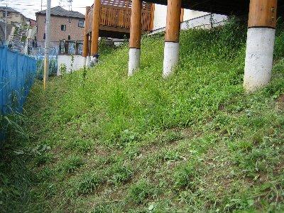 草むしり、しんどいけど果樹OK_c0038619_22352818.jpg