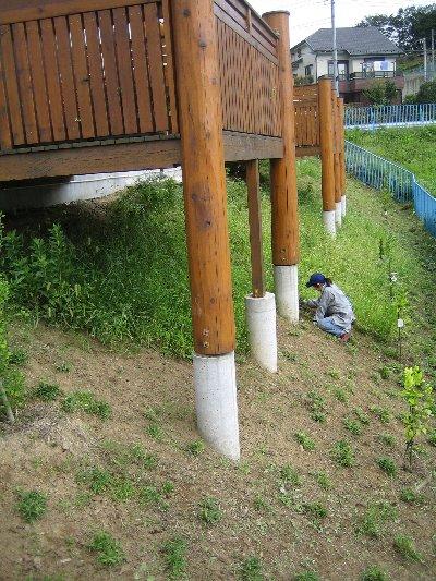 草むしり、しんどいけど果樹OK_c0038619_22353842.jpg