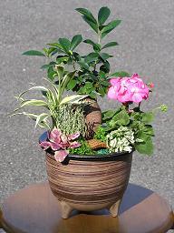 和の鉢の寄せ植えも楽しい♪_e0063296_14104623.jpg