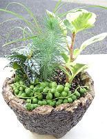 和の鉢の寄せ植えも楽しい♪_e0063296_14105382.jpg