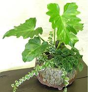 和の鉢の寄せ植えも楽しい♪_e0063296_1411084.jpg