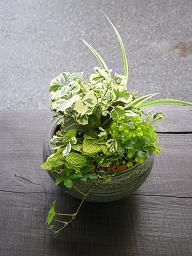 和の鉢の寄せ植えも楽しい♪_e0063296_14145542.jpg