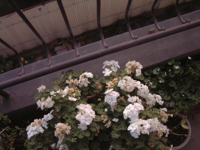 シネ・ヌーヴォと夕陽、あるいはフリッカーという映像の魔_e0017332_2225795.jpg