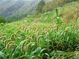 池川の焼畑 蕎麦収穫後の状況_e0002820_2253185.jpg