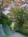 2005年10月23日(日) 雨・13℃_a0024488_147854.jpg