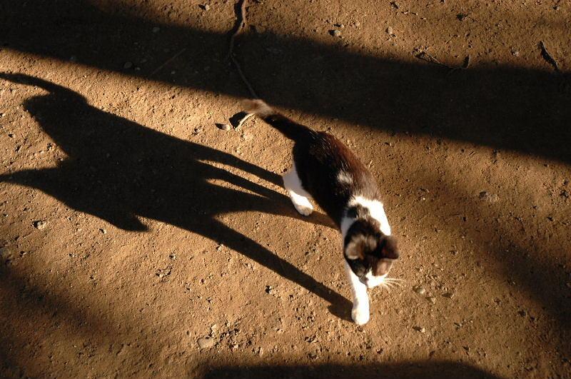 おいしそうな脚の女子高生 201脚目 [無断転載禁止]©bbspink.com->画像>4754枚