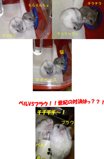 c0032408_17395253.jpg