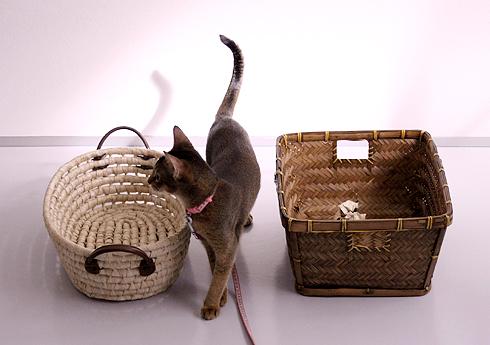 猫的どっちの籠でショー_e0090124_1031419.jpg