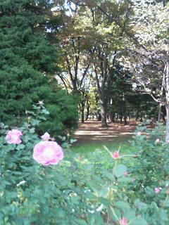 代々木公園_a0042928_172026.jpg