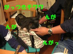 c0004744_19443350.jpg