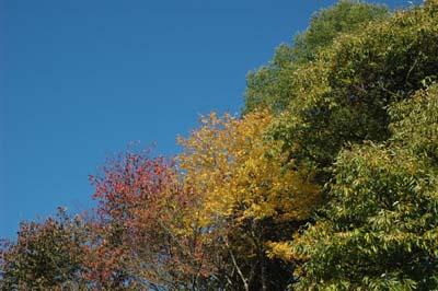 秋ですね_b0038919_216565.jpg