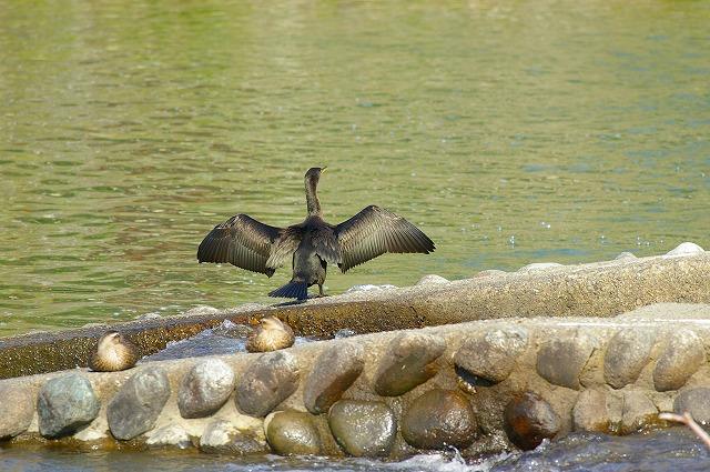 水鳥の群れる川~犀川_d0043136_2137911.jpg