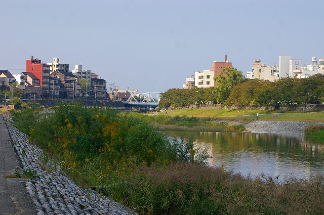 水鳥の群れる川~犀川_d0043136_2138268.jpg