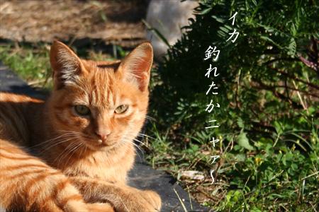 b0049180_2011135.jpg