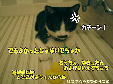 b0041182_805970.jpg