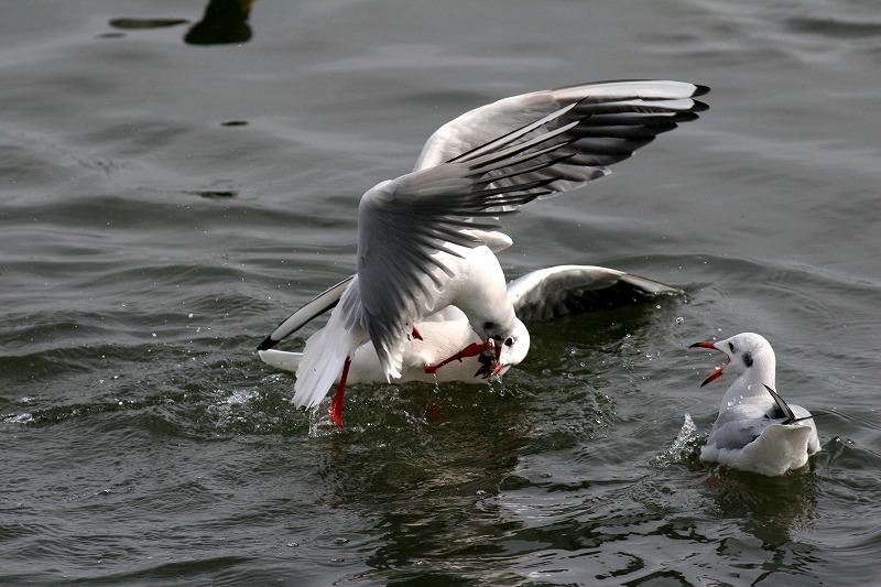 これからこちらは白鳥だべさ~_a0039860_21145767.jpg