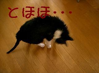 d0005397_16495066.jpg