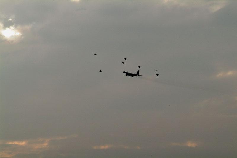 ハトの群れとC130輸送機_b0024798_6364280.jpg