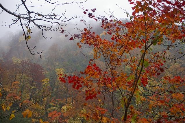 秋の別当出合_d0043136_21565016.jpg