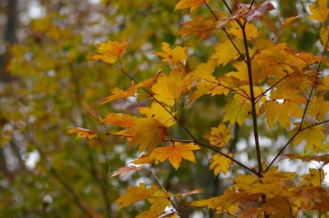 秋の別当出合_d0043136_21572087.jpg