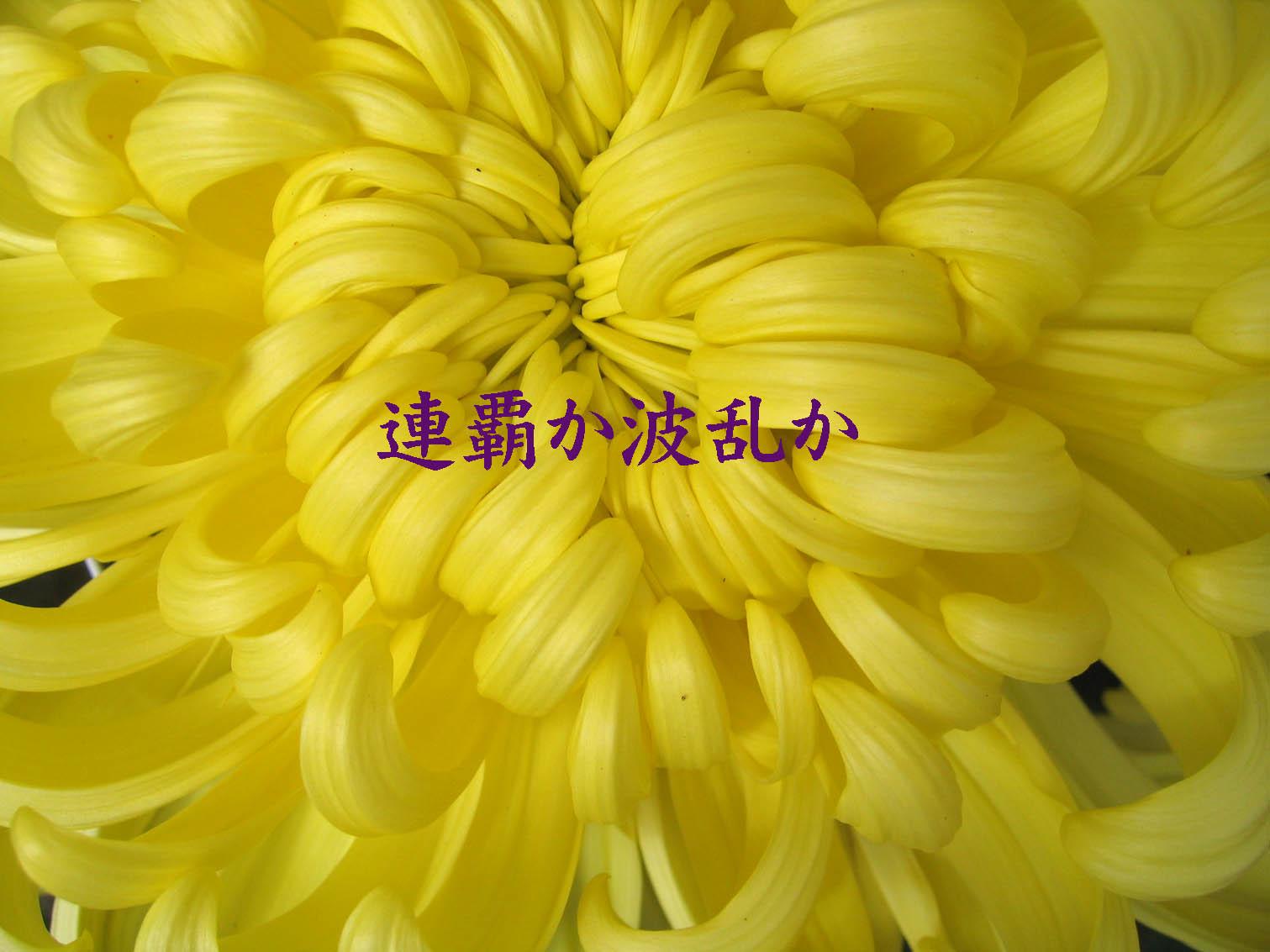 b0000357_2028516.jpg