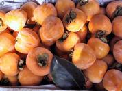今日は、柿の収穫_e0092612_11181858.jpg